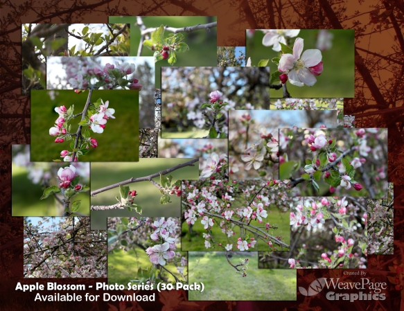 Apple Blossom photo series