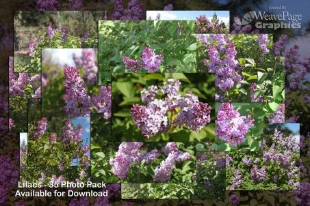 Lilacs-Promo