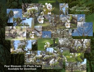 Pear Blossom Photo Pack